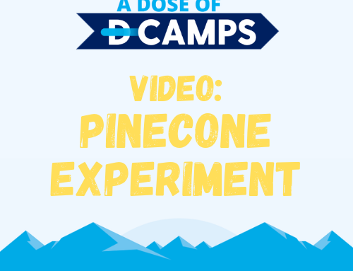 Pinecone Experiment