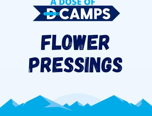 Flower Pressings