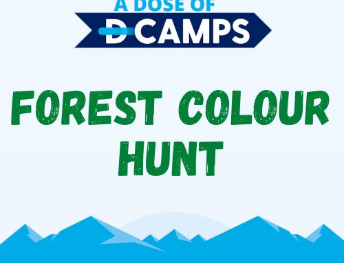 Forest Colour Hunt